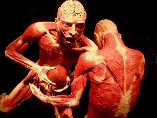 Football players at Body Worlds Pulse