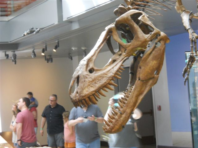 T-Rex Dinosaur at the LA County Natural History Museum